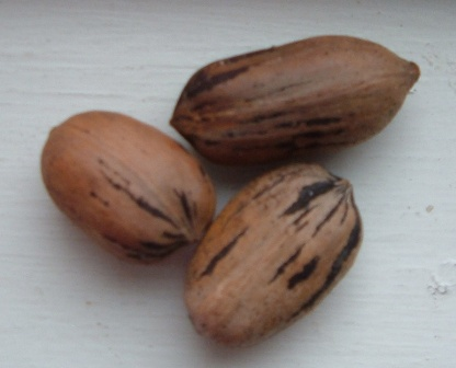 group-of-pecans