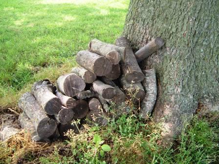 pecan wood for smoking