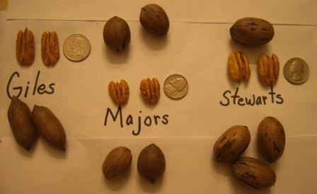 pecan types comparision